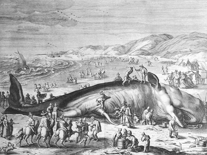 800px-Im_Februar_1598_an_der_holländischen_Küste_gestrandeter_Walfisch